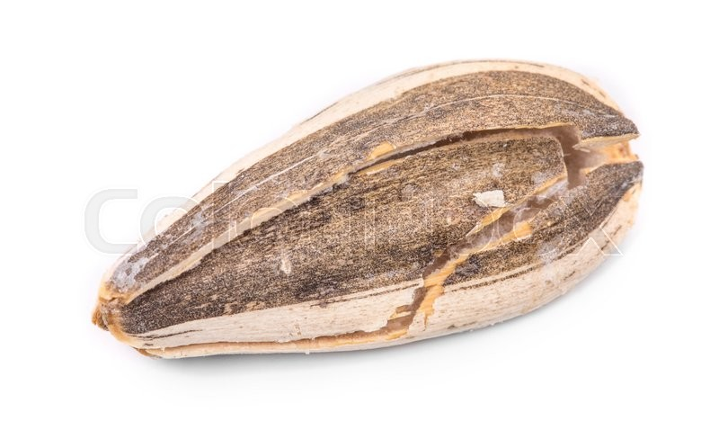 Stock image of 'Close up of sunflower seed. Isolated on a white background.'