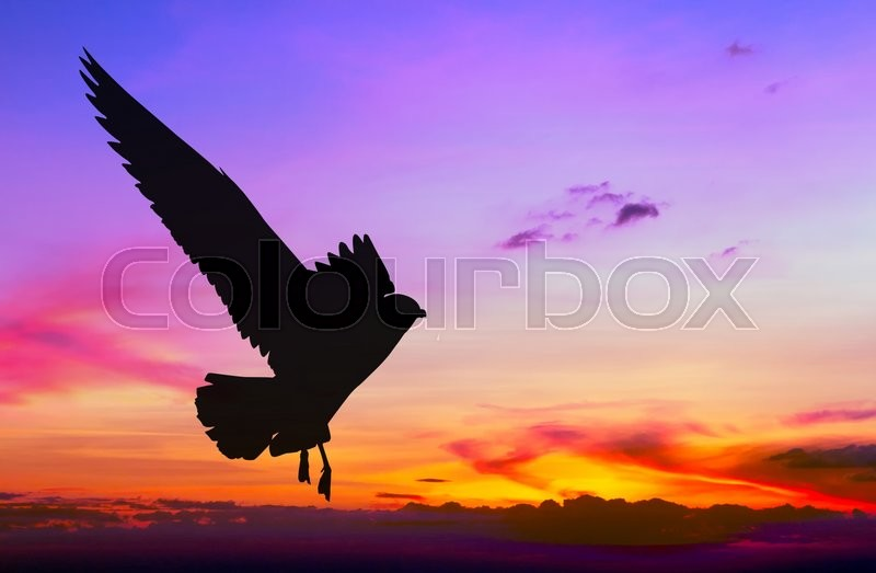 Stock image of 'Silhouetted seagull flying at colorful sunset'