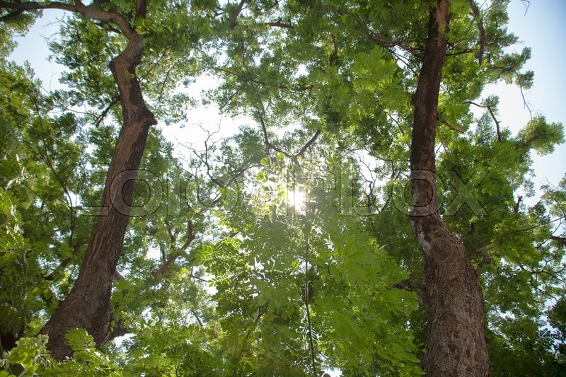 Stock image of 'Under the trees Sunlight through the trees down. The trees in the park'