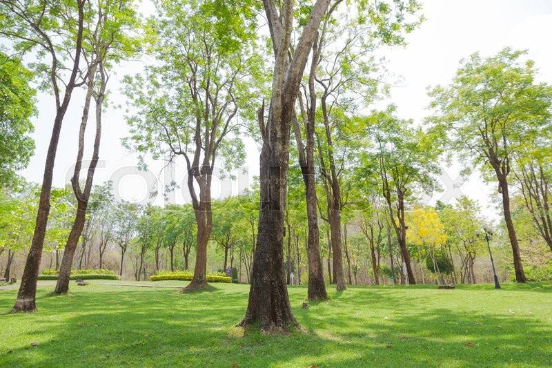 Stock image of 'Trees in the park. Trees are planted in a garden on the lawn.'
