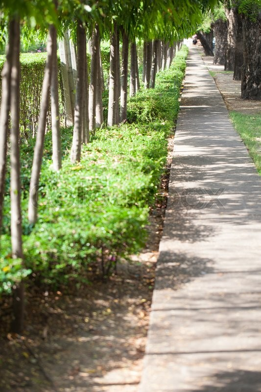 Stock image of 'walk in the park. There are tall trees and shrubs planted beside the walk in the park.'