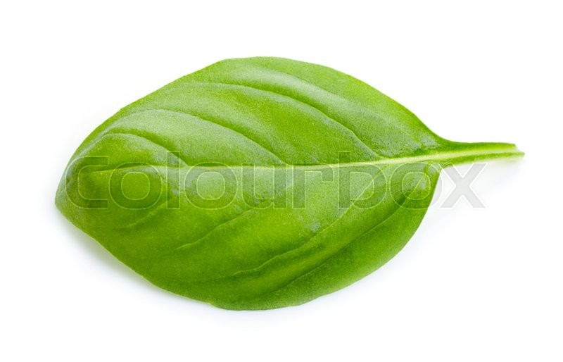 Stock image of 'green basil leaf isolated on white background'