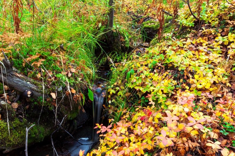 Stock image of 'Forest stream in autumn woods'