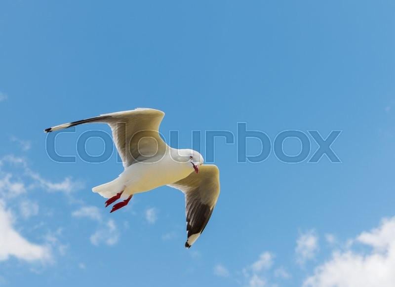 Stock image of 'flying seagull in the blue sky with clouds '