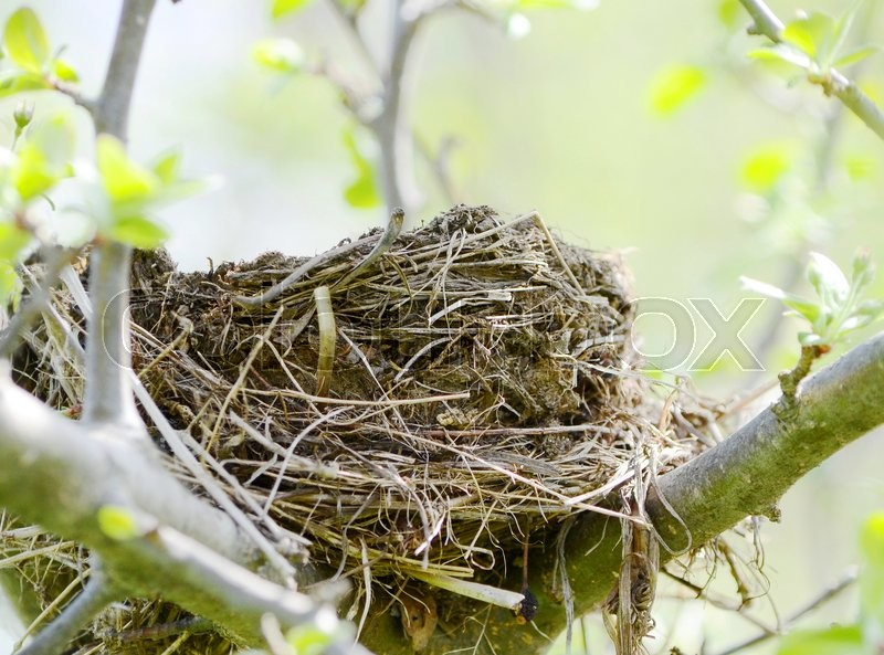 Stock image of 'Nest'