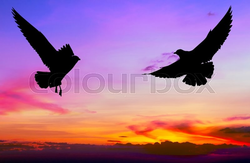 Stock image of 'Silhouetted two seagull flying at colorful sunset'