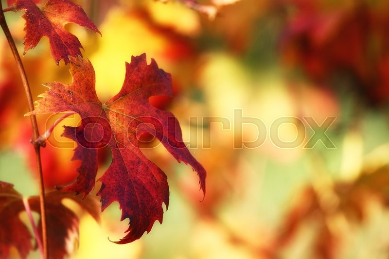 Stock image of 'Autumn leaves'