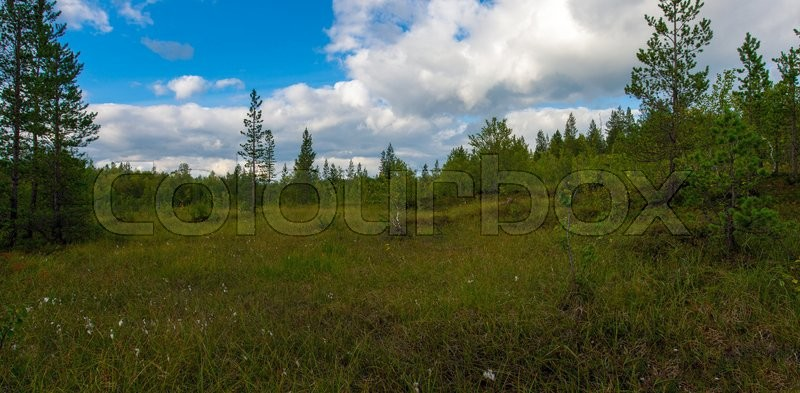 Stock image of 'Marshy tundra in the summer in Russia.'