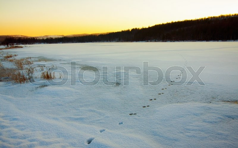 Stock image of 'Fox tracks in the winter on the lake in the forest'