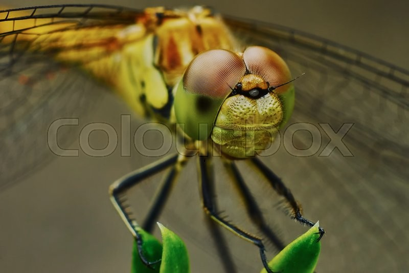 Stock image of 'Portrait of a dragonfly in the garden in summer                               '