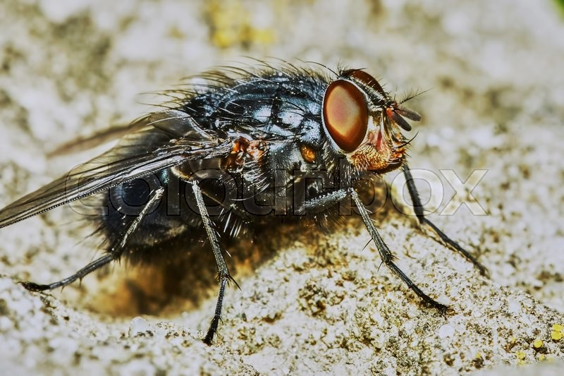 Stock image of 'Gray fly sat down to rest on a hot day'