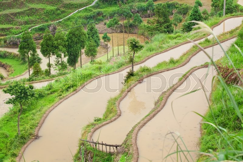 Stock image of 'Farm on rice terraced fields in surice, China'
