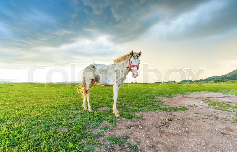 Stock image of 'Horses grazing on pasture at sundown in orange sunny beams'