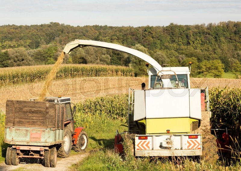 Stock image of 'A little corn harvesting in Slovenia, Europe.'