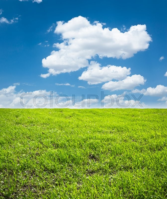 Stock image of 'Spring Landscape'
