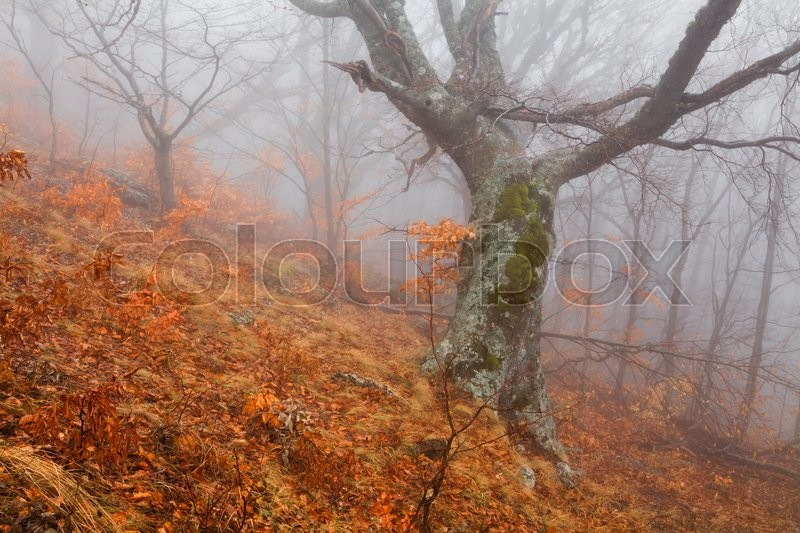 Stock image of 'Mysterious foggy autumn forest on the mountain slope.'