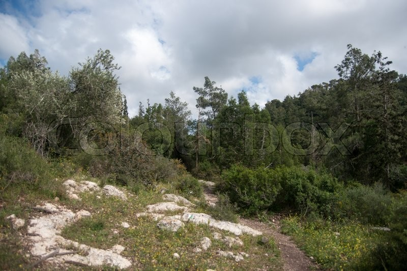 Stock image of 'Hiking in Israeli nature landscape with good weather under cloudy sky'