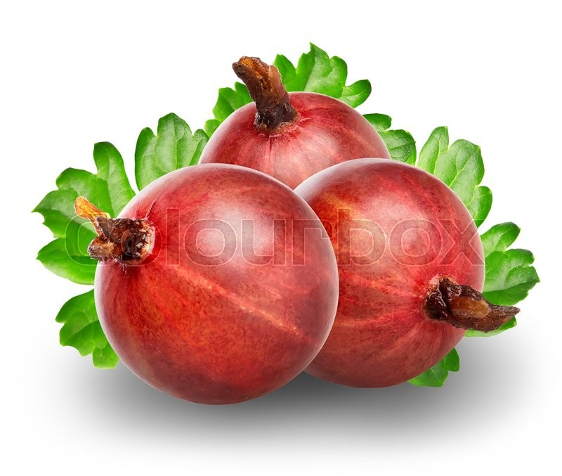 Stock image of 'Red gooseberry isolated on a white background'