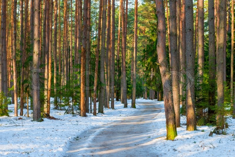 Stock image of 'Snowy road in a mixed forest in winter'