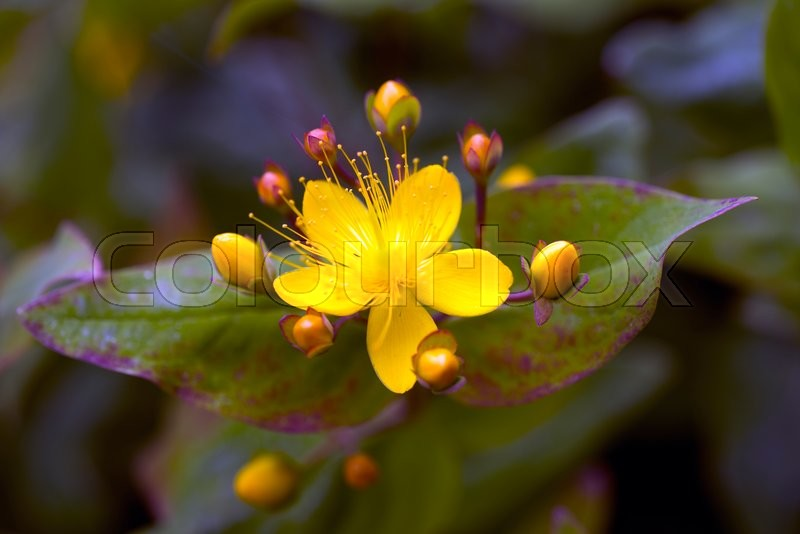 Stock image of 'Abstract yellow flower closeup with soft focus andbeautiful nature '