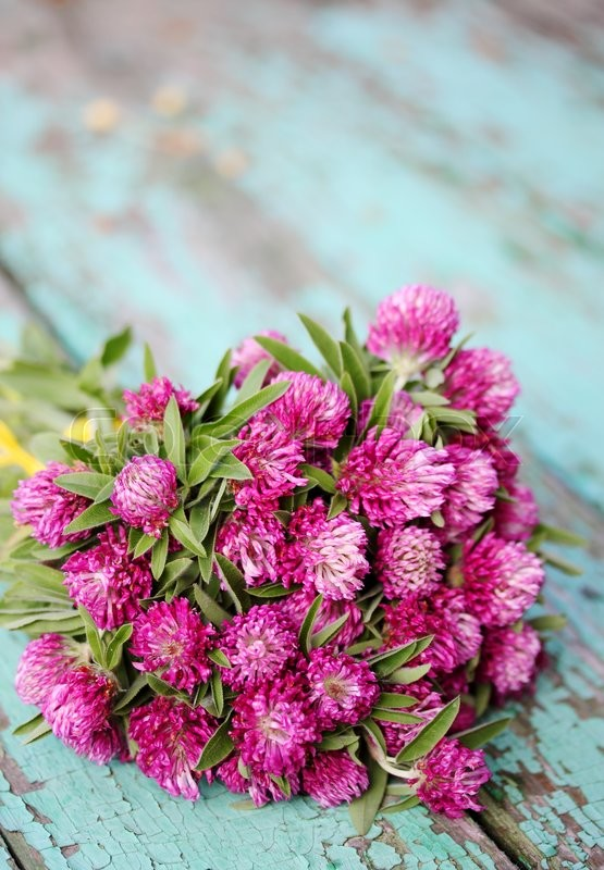 Stock image of 'Beautiful bouquet of wild flowers clover'