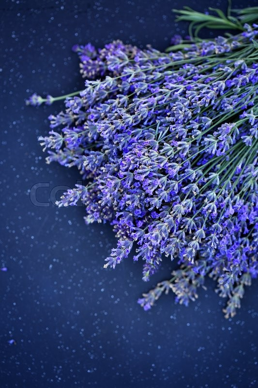 Stock image of 'Beautiful, large bouquet of lavender'