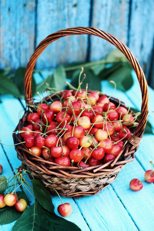 Stock image of 'red sweet cherries in a large wicker basket'