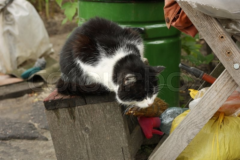 Stock image of 'Fluffy two-tone black and white cat sitting among old dumped in a bunch of outdoor things.'