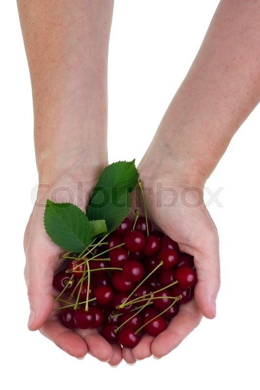 Stock image of 'The rural worker holds in hand of ripe red  sweetcherries heap. Isolated studio shot concept'