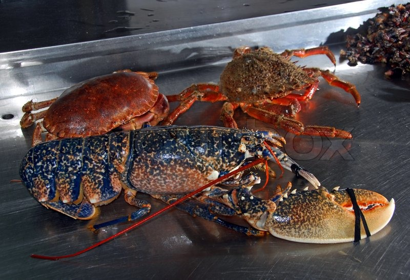 Alive Lobster and crabs in a fishermans shop | Stock Photo | Colourbox