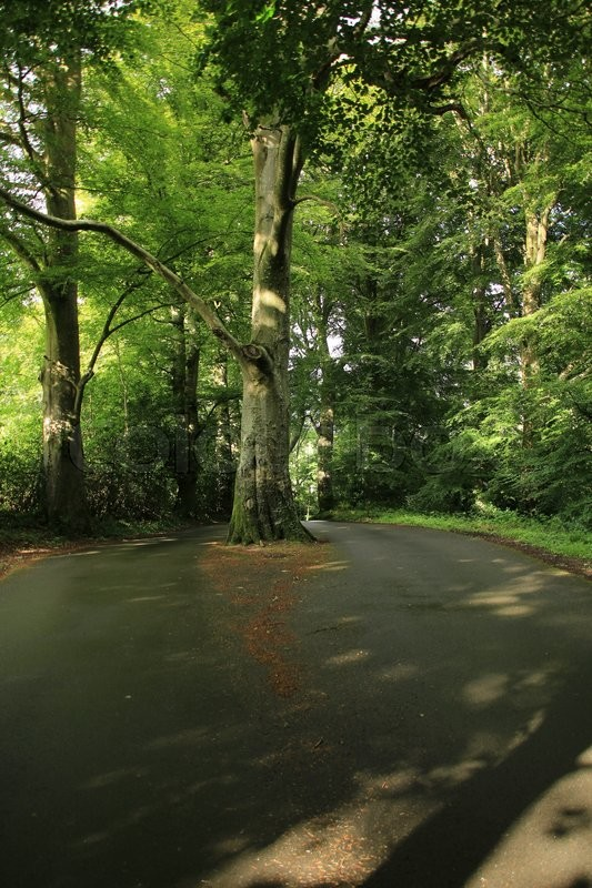 The tree stands in the middle of the road and the traffic must passing the tree at both sides in this park, stock photo