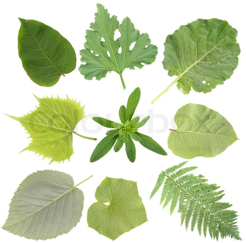 Green gartenarbeit pflanzen bl tter gesetzt stockfoto for Green pflanzen