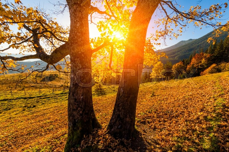 Beautiful autumn tree in the sun against the backdrop of mountains, stock photo