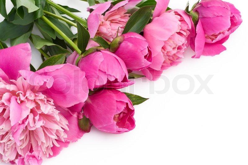 blumenstrau aus rosa pfingstrosen auf einem wei en tisch postkarte hintergrund stockfoto. Black Bedroom Furniture Sets. Home Design Ideas