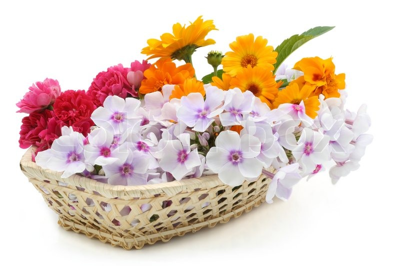 Summers fresh flowers in a basket isolated on white stock photo summers fresh flowers in a basket isolated on white stock photo colourbox mightylinksfo