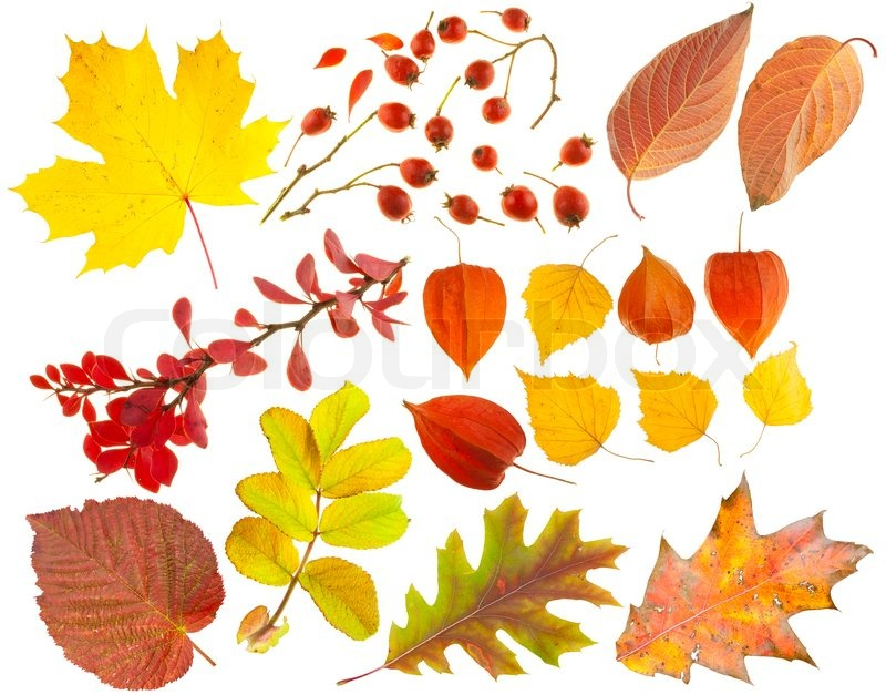 Set Of Design Elements On A Theme Of Autumn Leaves