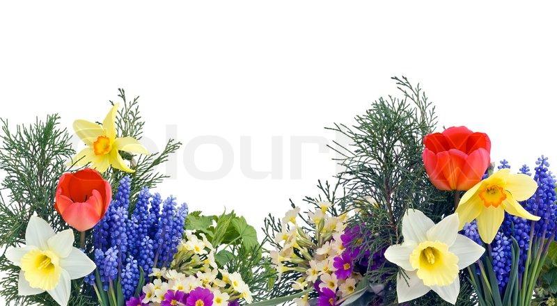 einfache collage postkarte mit fr hling april blumen stockfoto colourbox. Black Bedroom Furniture Sets. Home Design Ideas