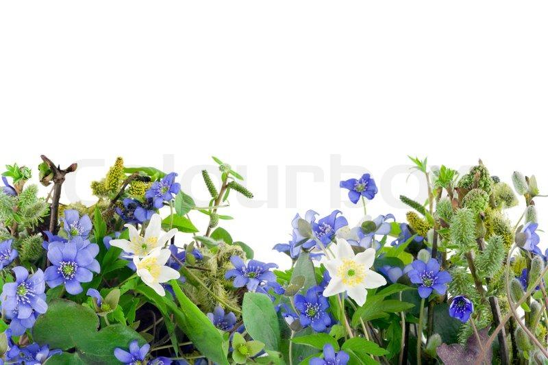 einfache collage pstcard mit ersten fr hlingsblumen wald hepatica nobilis und zweige mit. Black Bedroom Furniture Sets. Home Design Ideas
