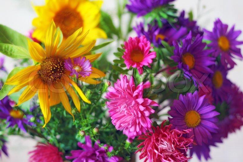 blumenstrau aus chrysanthemen feinen astern und sonnenblumen f r den geliebten zum zeitpunkt. Black Bedroom Furniture Sets. Home Design Ideas
