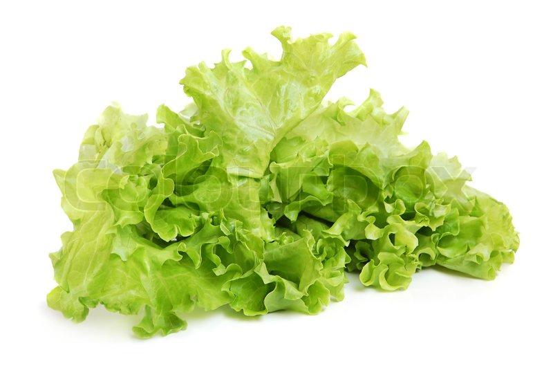Image result for fresh tasty lettuces green