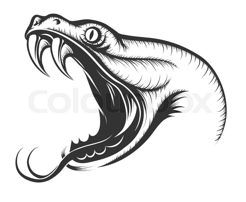 The head of Snake. Engraving style. Isolated on white.   Stock ...