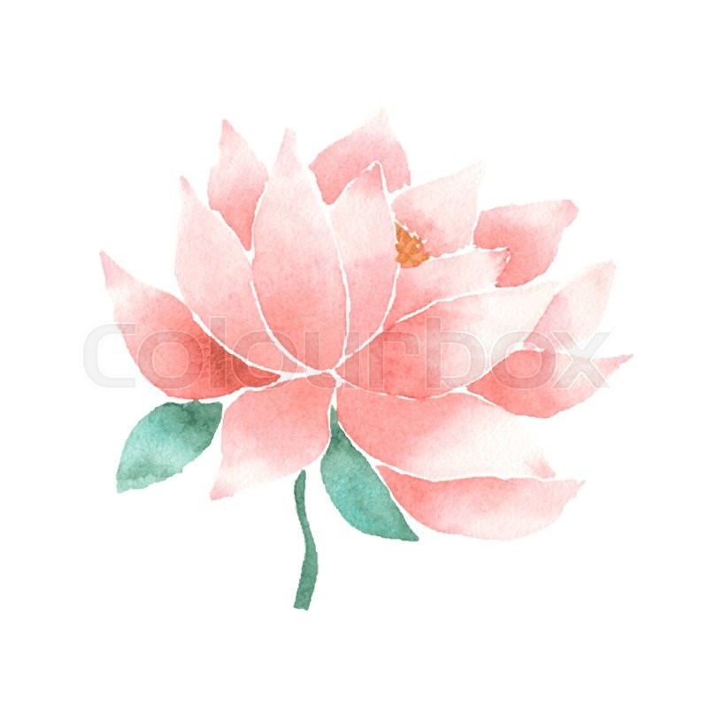 Watercolor Lotus Flower Pink Vector Painted Decorative Element