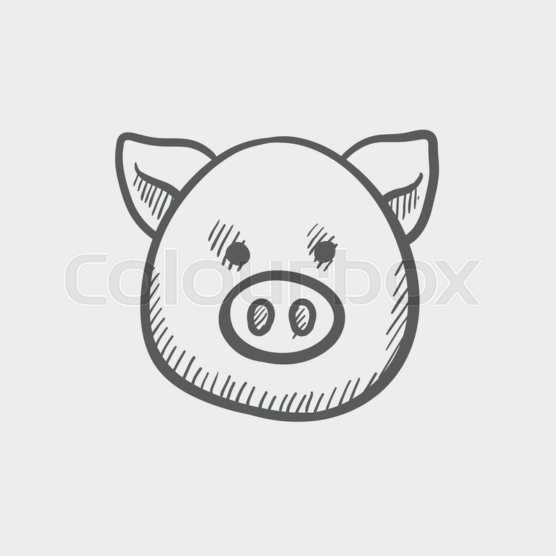 Pig Face Sketch Icon For Web And Stock Vector Colourbox