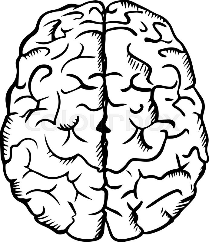 Human Brain Sketch In Ouline Style Isolated On White For Medicine