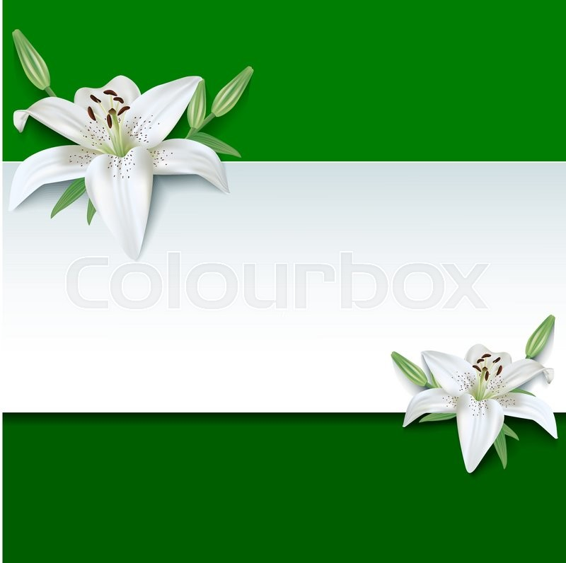 verde wallpaper lily flower - photo #12