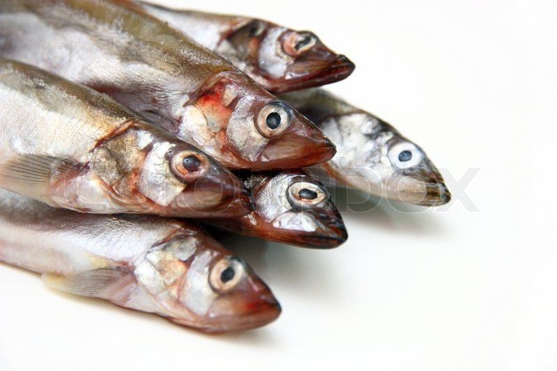 Masago Capelin Karaca Mail: Capelin Fish Isolated On The White Background
