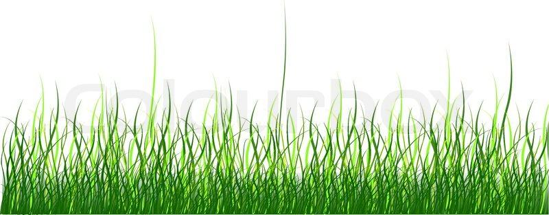 green grass on white background vector illustration