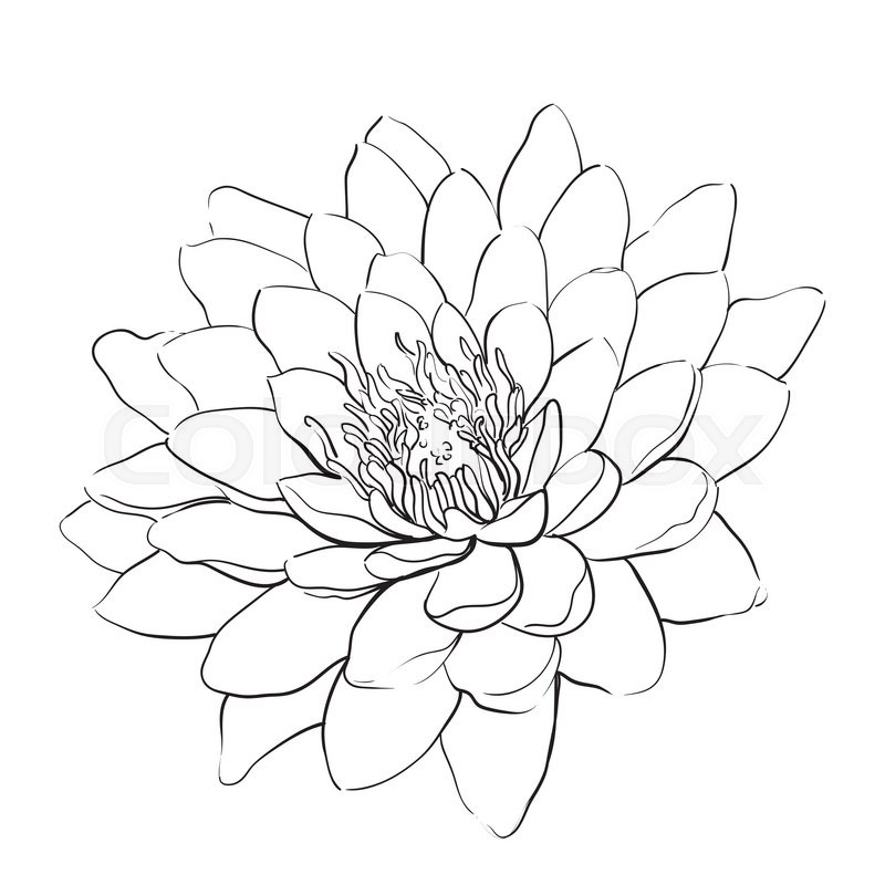 Outline lotus flower on white background stock vector colourbox mightylinksfo