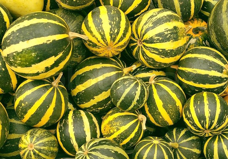 Background From Little Green Pumkins With Yellow Stripes