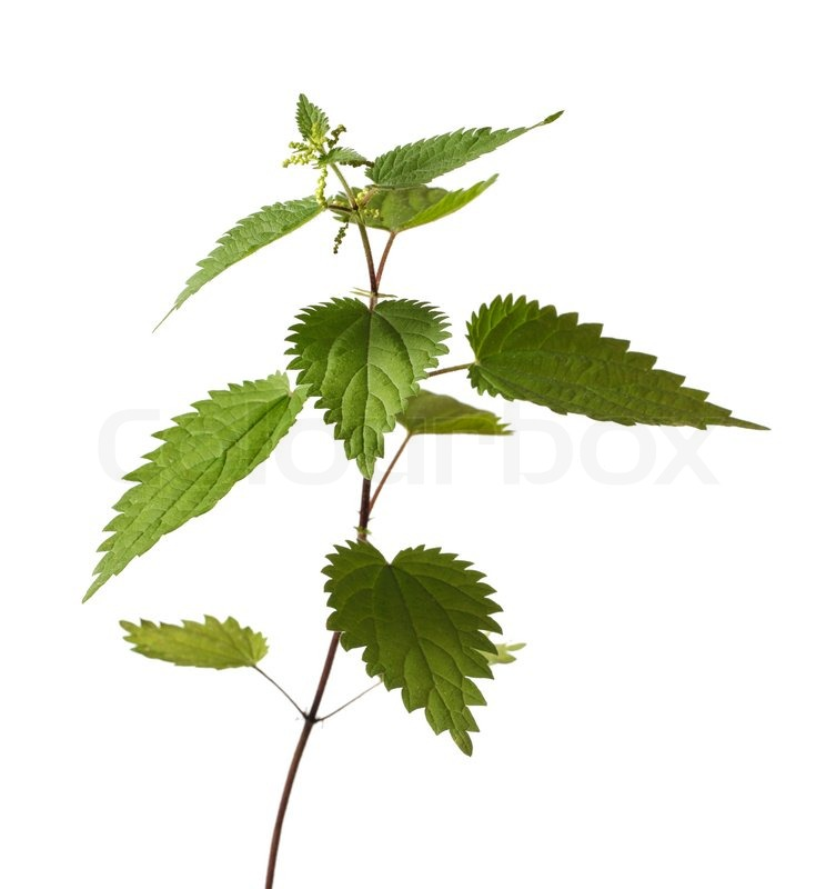 Dorable Blühende Pflanze Reproduktion Arbeitsblatt Festooning ...